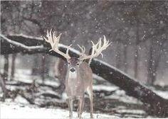 winter deer - Google Search