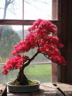 wikkid bonsai by Nick lenz