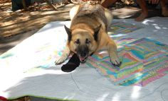 Stormy Days: Pets On Quilts 2015