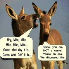 Jokes for Wednesday hump day Wednesday Hump Day, Wednesday Humor, Wednesday Coffee, Monday Humor, Happy Wednesday Quotes, Friday Funnies, It's Thursday, Thursday Quotes, Taco Tuesday
