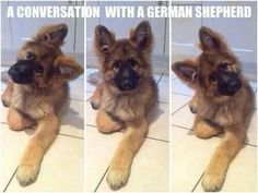 A conversation with a German Shepherd