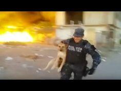 Un Policía rescata un perro de morir en un incendio - Afecto Animal. - YouTube