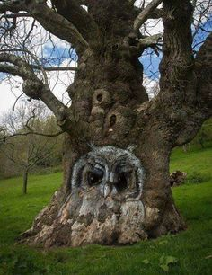 Amazing owl carved on a tree