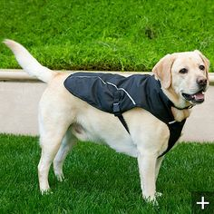 Even if your dog doesn't like to swim, you can keep him/her cool on hot #boating days with a tri-climate dog coat.