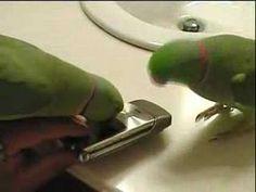 Blogs de Aves. Cuidar de tu mascota es facilisimo.com