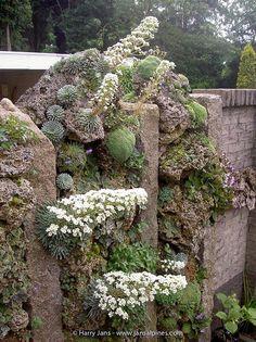 Gorgeous Tufa Wall (Wish it were mine! Rockery Garden, Rock Garden Plants, Lawn And Garden, Little Gardens, Back Gardens, Buddha Garden, Vertical Garden Wall, Alpine Garden, Succulent Gardening