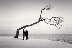 Beautiful Black and White Photos of a Sideways Japanese Tree by Michael Kenna