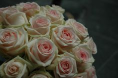 La vie est belle... Roses, Flowers, Plants, Life Is Good, Pink, Rose, Plant, Royal Icing Flowers, Flower