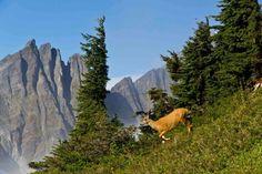 North Cascades, WA
