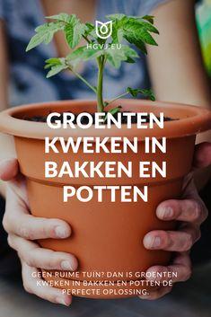 Fruit Garden, Herb Garden, Vegetable Garden, Garden Plants, Growing Vegetables, Fruits And Veggies, Growing Gardens, Small Space Gardening, Natural Garden