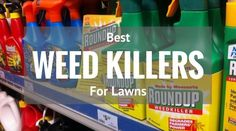 Best Weed Killer for Lawns 2017 and Reviews: I'd like to tell you how to choose the best lawn weed killer to remove weeds from your lawn.