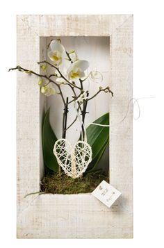 Leuk ideetje: een orchidee ingelijst.