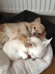 Cuddles in bed