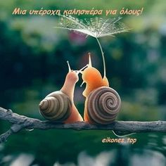 When you have become a snail in your second life. You might have that honeymoon feeling still. These two lovely snails just did that. Remembering the times when Cute Creatures, Beautiful Creatures, Animals Beautiful, Cute Funny Animals, Cute Baby Animals, Nature Animals, Animals And Pets, Animal Pictures, Cute Pictures