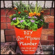 Anti-Mosquito Planter // DIY Anti-Mosquito Planter (from the girl with the black thumb). Using a variety of hardy plants to repel mosquitos such as lemongrass, marigolds and ageratum. Colorful too! Potted Plants Patio, Diy Planters, Fall Planters, Outdoor Planters, Container Plants, Container Gardening, Succulent Containers, Container Flowers, Homestead Survival