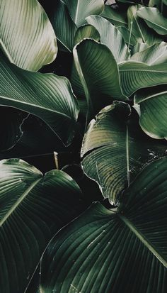 Trendy Plants Home Design Inspiration Plant Wallpaper, Tropical Wallpaper, Iphone Background Wallpaper, Iphone Backgrounds, Tumblr Wallpaper, Leaves Wallpaper, Hipster Wallpaper, Bathroom Wallpaper, Nature Wallpaper