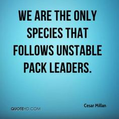 cesar millan quotes - Google Search. That's right. We don't follow the good people, unless we make a radical decision to follow God. But 90% of people, even believers, follows unstable pack leaders – even nasty dirty corrupt icky dark ones. We follow shepherds who don't care for the sheep but just want to eat the sheep.