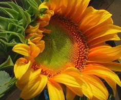 The best photo of a sunflower I have ever seen!  Absolutely marvelous.  via flickr