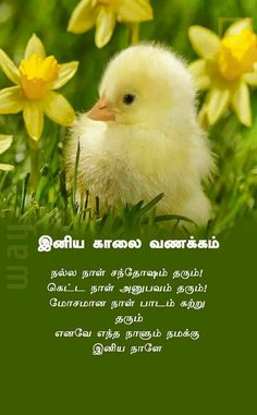 Good Morning Messages, Good Morning Wishes, Good Morning Quotes, Good Morning Beautiful Pictures, Good Morning Flowers Gif, Good Thoughts In English, Tamil Wishes, Baba Image, Happy Birthday Pictures