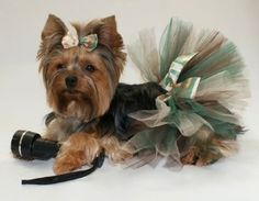 Camouflage Cutie Dog Tutu Skirt and FREE Matching...