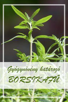 Growing Your Own Herbs Health 2020, Herbs Indoors, Organic Herbs, Medicinal Herbs, Grow Your Own, Herb Garden, Herbalism, Plant Leaves, Medicine