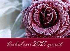Nieuwjaarskaart - roos-in-de-kou
