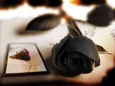 Black Rose Postcard dark gothic wallpaper HD Desktop wallpaper, images and photos