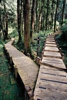 Two roads diverged in a wood, and I, I took the one less traveled by, And that has made all the difference. robert frost Forest Crossroads, Japan photo via ashaela Japan Photo, All Nature, Adventure Is Out There, Pathways, The Great Outdoors, Woodland, Places To Go, Trail, Beautiful Places