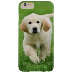 Golden retriever puppy barely there iPhone 6 plus case