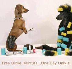 Doxie Beautician