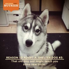 Learn something from your #pup! Another reason to #adopt a shelter #dog
