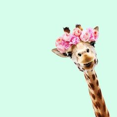 This is such a cute pic of a giraffe how cute it makes me want to laugh and smile! Bubbles Wallpaper, Look Wallpaper, Tier Wallpaper, Floral Wallpaper Iphone, Funny Phone Wallpaper, Animal Wallpaper, Cute Backgrounds, Cute Wallpapers, Wallpaper Backgrounds