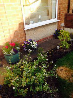 Front garden plants x