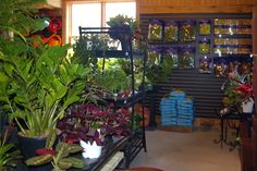 A section of our indoor tropicals section.