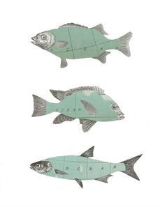 Ocean Fish Collage Art - Liking this. #collage