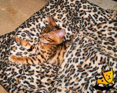 Where's the kitten???   Bengal Cat Camouflage