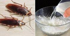Κατσαρίδες στο σπίτι: 7 απλοί και φυσικοί τρόποι για να εξαφανιστούν Kai