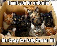 Crazy Cat Lady Starter Kit Kitten Love, I Love Cats, Cute Cats, Adorable Animals, Funny Cat Photos, Funny Cats, Hilarious Animals, Crazy Cat Lady, Crazy Cats