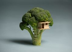 """beconinriot:  Brock Davis ""Broccoli House"" I wasn't able to build my son a treehouse, so I built him this broccoli house instead. Made with balsa wood.  """
