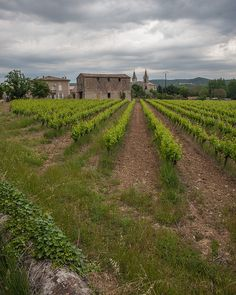 Goudargues through the vineyard, Gard, France