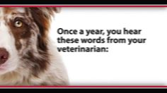 The Test Your Pet Should Take Testing, along with prevention, is an important part of keeping our dogs and cats healthy and free of disease. Here are important facts to know about heartworm disease and heartworm testing. Cat Vs Dog, Important Facts, Cat Quotes, Cats And Kittens, Your Pet, Pets, Words, Animals, Vinegar