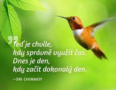 TERAZ je chvíľa, kedy správne využiť čas. Dnes je deň, kedy začať dokonalý deň. -- Sri Chinmoy
