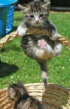 Filhotes de gato e brincadeiras