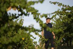"""Giving Lodi an identity in the bottle."" SFGate. Written by Jon Bonné. Sept. 6, 2013. Regional review. Focus on Borra Vineyards and winemaker, Markus Niggli. #Lodi #wine #BorraVineyards"