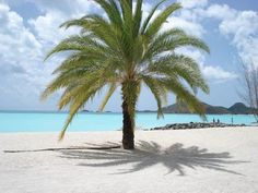 Image result for antigua and barbuda flowers plants and trees