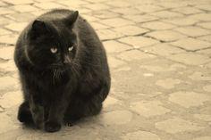 SilviaColombinoPhotographer: Cat