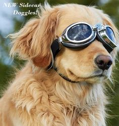 Doggles Sidecar Dog Goggles Sunglasses