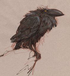 New Ideas Black Bird Fantasy Art Illustrations Crow Art, Raven Art, Bird Art, Raven Totem, Art And Illustration, Art Illustrations, Character Art, Character Design, Animation News