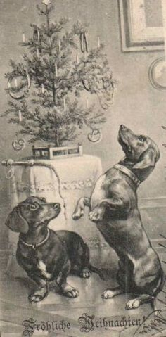 Vintage German Dachshund Christmas postcard via pinterest.com
