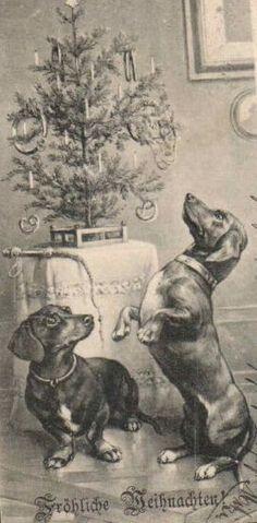 Vintage German Dachshund Christmas postcard - dachshunds and small table top tree
